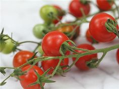 CHOICE 1. Tess's Land Race Currant Tomato. 55-68 days. Originated from Maryland's southern shore. The tiny fruit of this variety vary in color; most are deep red but some are also rose, gold and yellow. Very sweet.