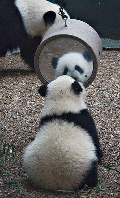 Mei Lun, is that you? How did you get over there?! | Flickr - Photo Sharing!