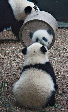 好奇心いっぱいのパンダ、パンダの着ぐるみならhttp://www.mascotshows.jp