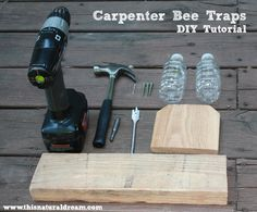 carpenter bee traps
