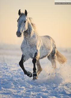 Photos of horses of Russian breeds by Ekaterina Druz Equine Photography Horses In Snow, Cute Horses, Horse Love, Wild Horses, Most Beautiful Horses, All The Pretty Horses, Animals Beautiful, Horse Photos, Horse Pictures