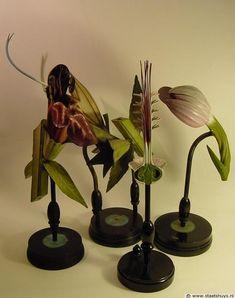 Antique paper mâché botanical models