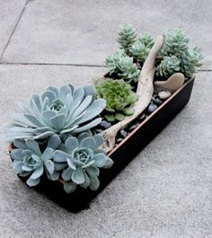 Living Arrangements Los Angeles, is a brilliant company that bypasses the ubiquitous floral arrangement for a lasting gift of beautiful potted succulent arrangements. With recycled containers to choose from and gorgeous sedum blends--this concept should be in every town and available FTD.