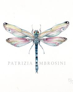 9x7 Watercolour Dragonfly.. No.5 by happyapplebumblebee on Etsy