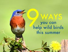 While having fun in the summer sun, it's important to ensure that our activities don't harm local wildlife. Here are 9 tips for keeping wild birds safe.