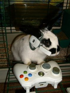 Cool rabbit - Ha! We probably couldn't take this picture with Barristan, he eats thumb-sticks... >_<