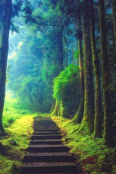 New Nature Forest Landscape Pathways Ideas Beautiful World, Beautiful Places, Beautiful Pictures, Beautiful Forest, You're Beautiful, Beautiful Scenery, Absolutely Gorgeous, Pathways, Belle Photo