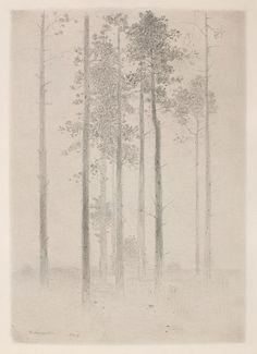 """Gunnar Norrman, Tallar (pines), 1964, pencil, 8 x 5.75"""""""
