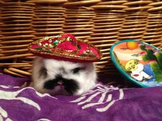 Little sombrero