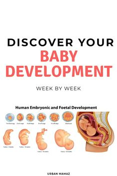 Stages of pregnancy: Pregnancy Trimesters - Pregnancy stages: All you need to know about pregnancy and baby development. Discover all the pregn - Pregnancy First, Pregnancy Trimesters Pregnancy Memes, Pregnancy Guide, Trimesters Of Pregnancy, Pregnancy Stages, Pregnancy Workout, Early Pregnancy, Baby Week By Week, Baby Development By Week, Tips For Pregnant Women