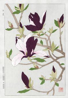 Lot 00410 shin-hanga woodblock print Kawarazaki Shodo MAGNOLIA Period: Condition: very good Size: 27 x cm Illustration Botanique, Art Et Illustration, Botanical Drawings, Botanical Prints, Impressions Botaniques, Art Chinois, Art Asiatique, Art Japonais, Japanese Flowers