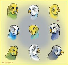 Budgie Expressions by *Kanis-Major on deviantART