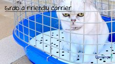 Get a Friendly #cat Carrier @easyologypets