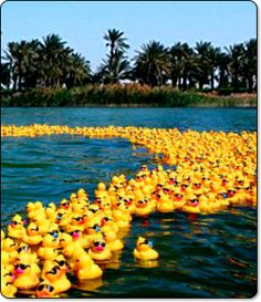 Perhaps we need some rubber duckies in the pond for the wedding too