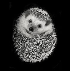 Good Morning! Cute hedgehog print :)