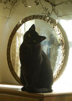 Romeo, sitting so handsome.