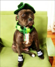 Saint Patricks Day dogs