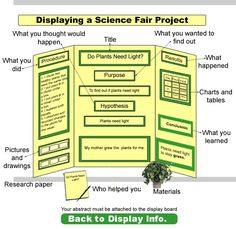 science fair boards examples | Outstanding Science Fair Display Boards
