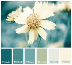 Flower Print- Teal And Yellow Shabby Chic Flower Photography Soft Yellow Aqua Sapphire Teal Photography Paint Schemes, Colour Schemes, Color Combos, Beddinge, Dining Room Colors, Kitchen Colors, Colour Pallette, Color Swatches, House Colors