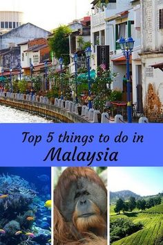 My Top 5 Things To Do In Malaysia | The Diary Of A Jewellery Lover including visiting colonial #Malacca, watching tea being picked in the Cameron Highlands and visiting the Sepilok Orangutan Rehabilitation Centre Malaysia Travel, Singapore Travel, Asia Travel, Best Places To Travel, Places To Visit, Kuala Lampur, Cameron Highlands, Road Trip Hacks, Vacation Trips