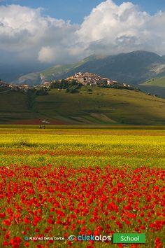 Anche quest'anno ci ritroveremo a Castelluccio di Norcia per ammirare lo splendore della fioritura che caratterizza il paesaggio dell'Appennino Centrale, in particolare modo, il Pian grande del parco nazionale dei monti Sibillini. Vi Aspetto.