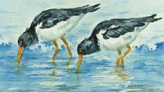 Bird and animal enthusiasts, nature and watercolor lovers will be delighted to receive this original painting of two eastern oyster catchers feeding on the beach.   This is an orginal hand painted watercolor not a print or reproduction.  Title: Oyster Catchers at Low Tide Image size: 5 x 7 inches (12.5 x 17.5 cm) Medium: Windsor and Newton Artist Quality Watercolor on 140lb Arches Coldpress Watercolor paper