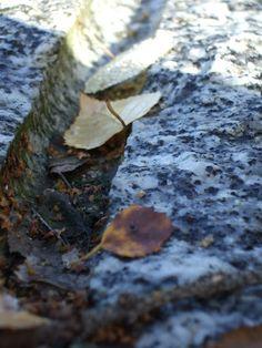 autumn leaves  Bilingual Blah Blah: Herbstblätter - ein Makro-Versuch