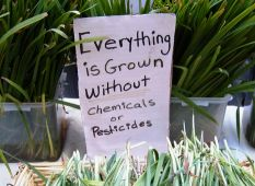 Six homemade herbicides that kill the weeds without killing the earth