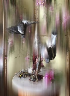 Isabella Blow exhibition at Somerset House! * Photos by Nick Knight Creative Portraits, Creative Photography, Art Photography, Nick Knight Photography, Isabella Blow, Tomorrow Is Another Day, I Believe In Pink, Language Of Flowers, Central Saint Martins