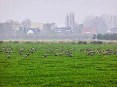 Millingen aan de Rijn (Gelderland)