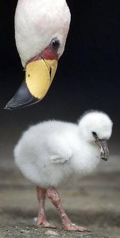 Baby Flamingo<3