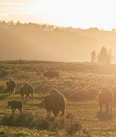 "Wyoming: Go on an ""American safari."""