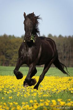 One day, I'll buy me a black horse :)