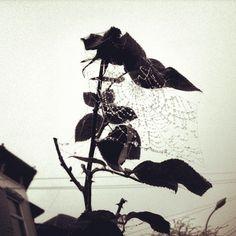 Spiders in November - @frantik- #webstagram