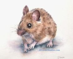 """""""Misha Mouse"""", watercolor mouse painting by animal artist, Teresa Silvestri.  Original sold, but prints & cards available.  Photo reference thanks to Andrea Siemt."""