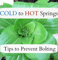 Prevent bolting with your cool season greens