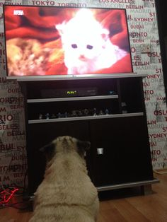 Puky is watching Animal Planet-So Cute.