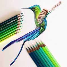Long tailed Sylph. Brightly Colored Animal Pencil Drawings. By Sallyann Rainbow Colors, Bright Colors, Teaching Drawing, Pencil Drawings Of Animals, Color Pencil Art, Art Forms, Colored Pencils, Bunt, Illustration Art