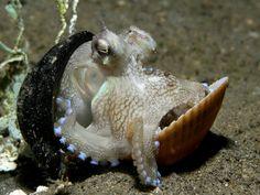 Belleza animal Toda la naturaleza es como un arte desconocido del hombre. Alexander Pope