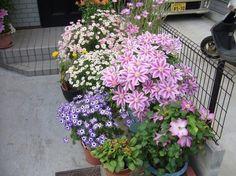 Клематис Plants, Flora, Plant, Planting