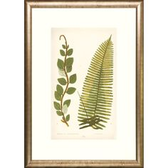 Ferns Transitional Framed Art Print