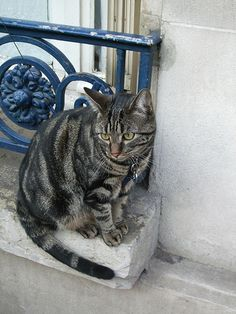 Parisian cat  ;)