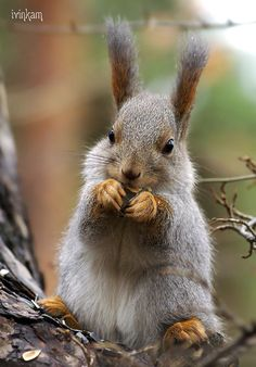 Like Animals, Animals And Pets, Baby Animals, Funny Animals, Cute Squirrel, Squirrels, Spring Pictures, Animal Jokes, Tier Fotos