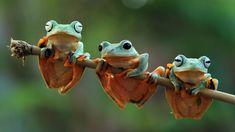 Este viernes 5 de junio se celebra el Día Mundial del Medio Ambiente, una fecha designada por Naciones Unidas para fomentar la acción ambiental. El tema central es la biodiversidad. You Know Where, Did You Know, Especie Animal, Trivia, Nature, Animals, Jungles, United Nations, Calendar Date