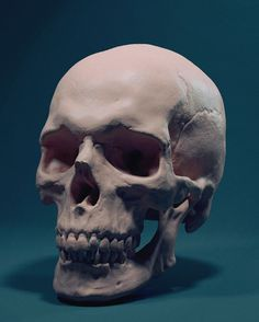 """Anatomy Studies """"""""Sculpting: The creation of this was done completely within Zbrush, aside from the cloth which was a MD sim. Using a sphere and dynamesh I started with the skull and then the jaw...."""