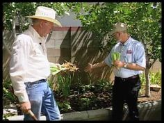 How to divide and replant irises