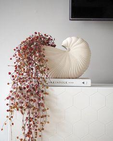 Scandinavian Home, Soft Furnishings, Home Accessories, Shells, Interior Design, Pretty, Instagram, Home Decor, Conch Shells