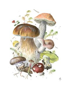 An Art Gallery of Botanical Artists and Illustrators with portfolios of their paintings, drawings and artwork. Decoupage, Impressions Botaniques, Illustration Botanique, Mushroom Art, Nature Illustration, China Painting, Botanical Prints, Art Photography, Stuffed Mushrooms