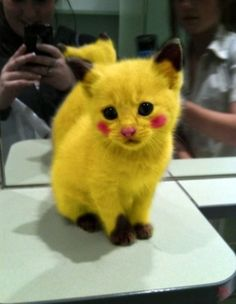 Pika Pika by Hide Out