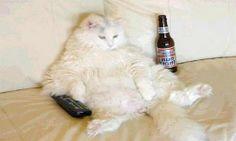 Cani e gatti  obesi